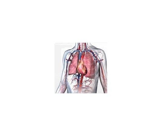 Sistema cardio respiratorio y metabolico
