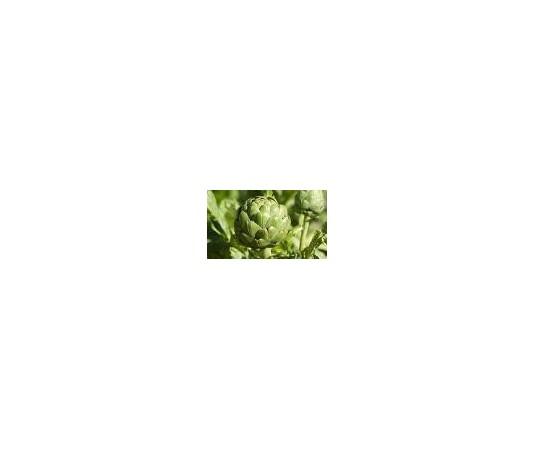 Diuréticos, plantas diuréticas - Farmahouse, tu farmacia 24 horas